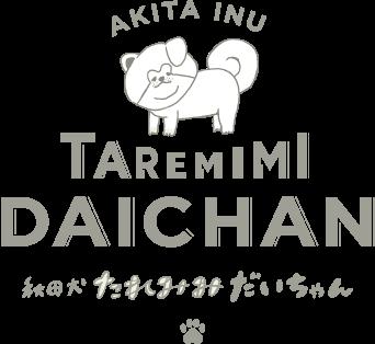 秋田犬 たれみみだいちゃん