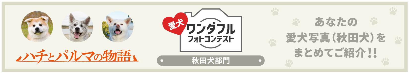愛犬ワンダフルフォトコンテスト 秋田犬部門